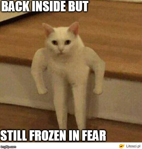 cat stare of DEATH! | BACK INSIDE BUT STILL FROZEN IN FEAR | image tagged in froze in fear,cat come in,cat stand,straight up,stand at stair case bottom,funny  look | made w/ Imgflip meme maker