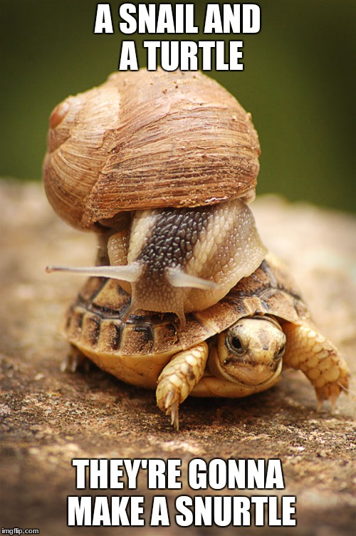 How | A SNAIL AND A TURTLE THEY'RE GONNA MAKE A SNURTLE | image tagged in snail riding turtle | made w/ Imgflip meme maker
