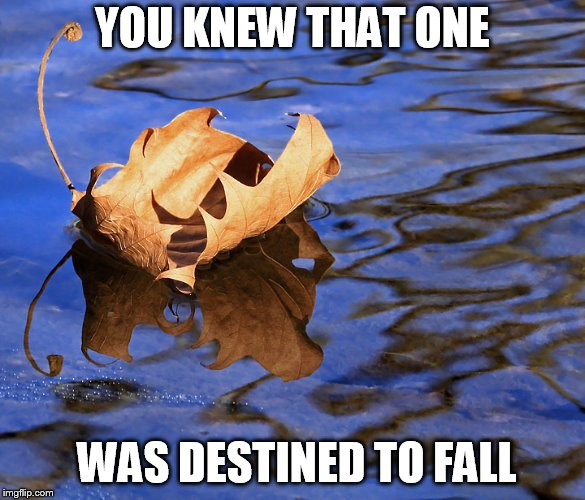 well we knew that one was bout to fell |  YOU KNEW THAT ONE; WAS DESTINED TO FALL | image tagged in leaf,fall,knew,that,one,destined to fall | made w/ Imgflip meme maker