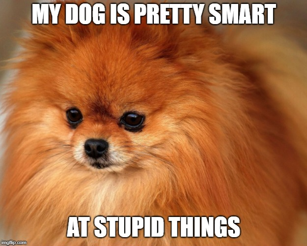 MY DOG IS PRETTY SMART AT STUPID THINGS | made w/ Imgflip meme maker
