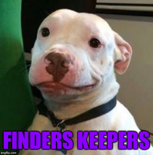 Awkward Dog | FINDERS KEEPERS | image tagged in awkward dog | made w/ Imgflip meme maker