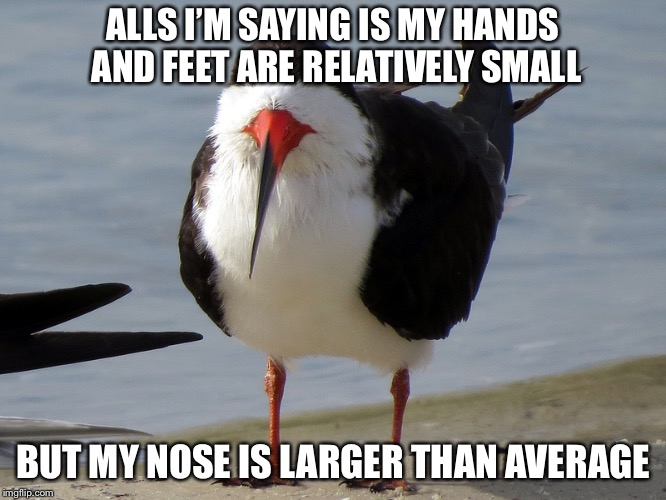Even Less Popular Opinion Bird | ALLS I'M SAYING IS MY HANDS AND FEET ARE RELATIVELY SMALL BUT MY NOSE IS LARGER THAN AVERAGE | image tagged in even less popular opinion bird | made w/ Imgflip meme maker
