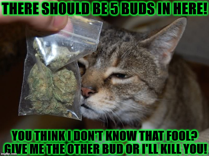 THERE SHOULD BE 5 BUDS IN HERE! YOU THINK I DON'T KNOW THAT FOOL? GIVE ME THE OTHER BUD OR I'LL KILL YOU! | image tagged in rip off | made w/ Imgflip meme maker