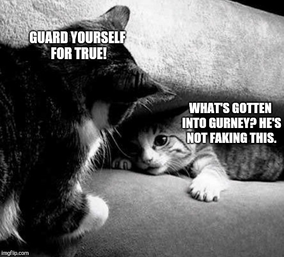 Dune Cats | GUARD YOURSELF FOR TRUE! WHAT'S GOTTEN INTO GURNEY? HE'S NOT FAKING THIS. | image tagged in dune,cats | made w/ Imgflip meme maker