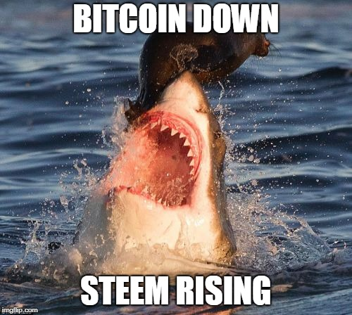 Travelonshark Meme | BITCOIN DOWN STEEM RISING | image tagged in memes,travelonshark | made w/ Imgflip meme maker