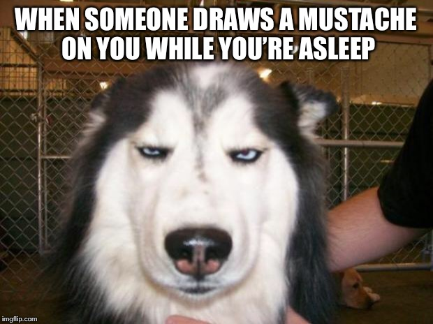 Pranked | WHEN SOMEONE DRAWS A MUSTACHE ON YOU WHILE YOU'RE ASLEEP | image tagged in annoyed dog,pranks | made w/ Imgflip meme maker