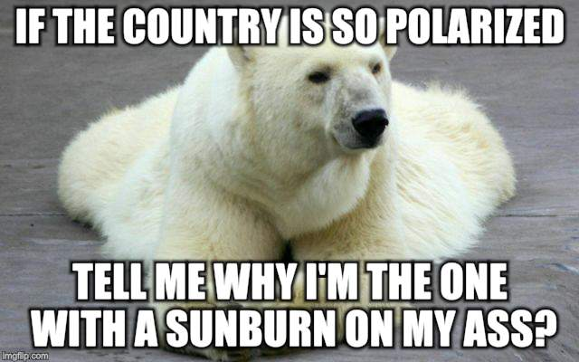 Chillin' | IF THE COUNTRY IS SO POLARIZED TELL ME WHY I'M THE ONE WITH A SUNBURN ON MY ASS? | image tagged in animals,polar bear | made w/ Imgflip meme maker