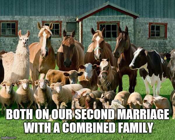 Looking for an 8 bedroom house | BOTH ON OUR SECOND MARRIAGE WITH A COMBINED FAMILY | image tagged in animals | made w/ Imgflip meme maker