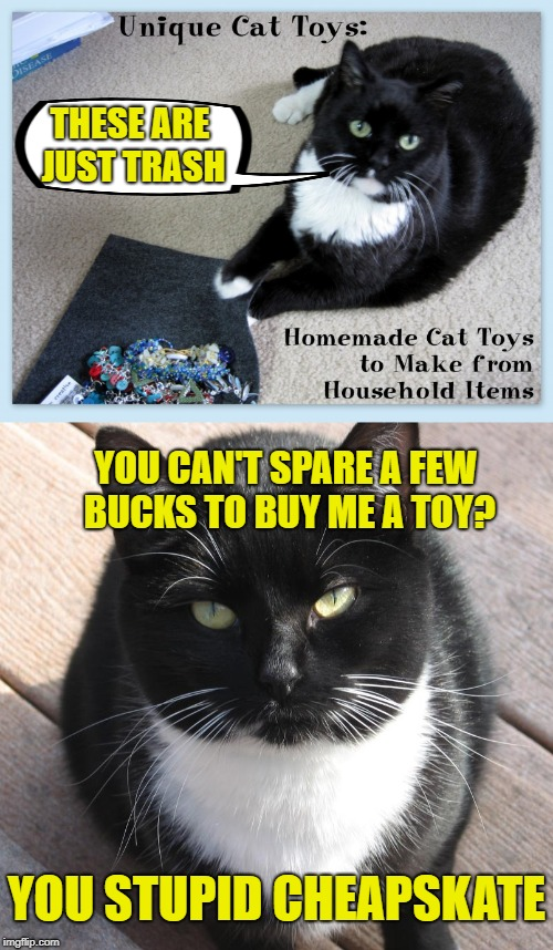 Dissatisfied Cat  | THESE ARE JUST TRASH YOU CAN'T SPARE A FEW BUCKS TO BUY ME A TOY? YOU STUPID CHEAPSKATE | image tagged in funny memes,cat,caturday,unhappy cat | made w/ Imgflip meme maker