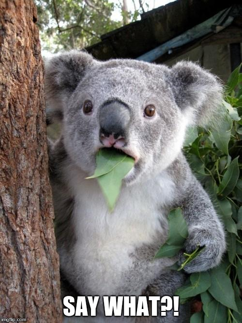 Cool Koala | SAY WHAT?! | image tagged in memes,surprised koala,say what,koala | made w/ Imgflip meme maker