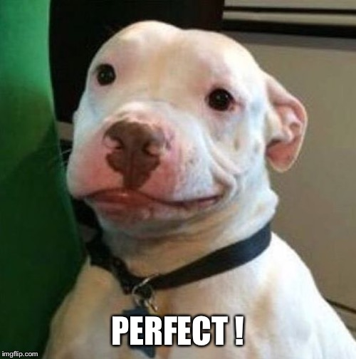 Awkward Dog | PERFECT ! | image tagged in awkward dog | made w/ Imgflip meme maker