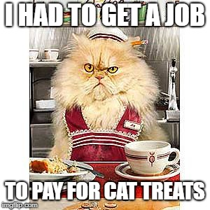 I HAD TO GET A JOB TO PAY FOR CAT TREATS | made w/ Imgflip meme maker