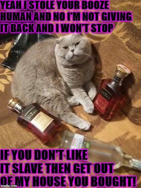 YEAH I STOLE YOUR BOOZE HUMAN AND NO I'M NOT GIVING IT BACK AND I WON'T STOP IF YOU DON'T LIKE IT SLAVE THEN GET OUT OF MY HOUSE YOU BOUGHT! | image tagged in drunken prick | made w/ Imgflip meme maker