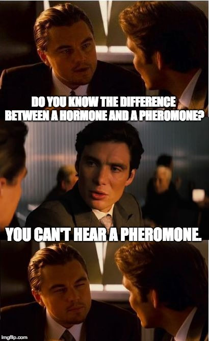 Inception Meme | DO YOU KNOW THE DIFFERENCE BETWEEN A HORMONE AND A PHEROMONE? YOU CAN'T HEAR A PHEROMONE. | image tagged in memes,inception | made w/ Imgflip meme maker