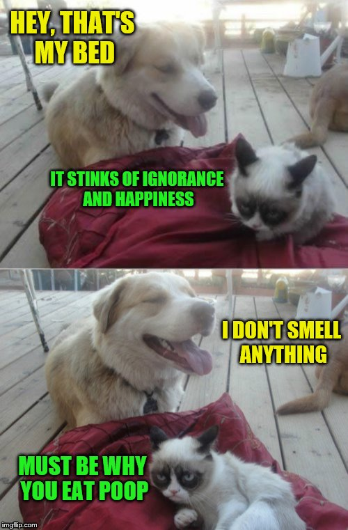 What's that smell? |  HEY, THAT'S MY BED; IT STINKS OF IGNORANCE AND HAPPINESS; I DON'T SMELL ANYTHING; MUST BE WHY YOU EAT POOP | image tagged in grumpy cat and his dog,memes,poop,smells,dashhopes,challenge | made w/ Imgflip meme maker