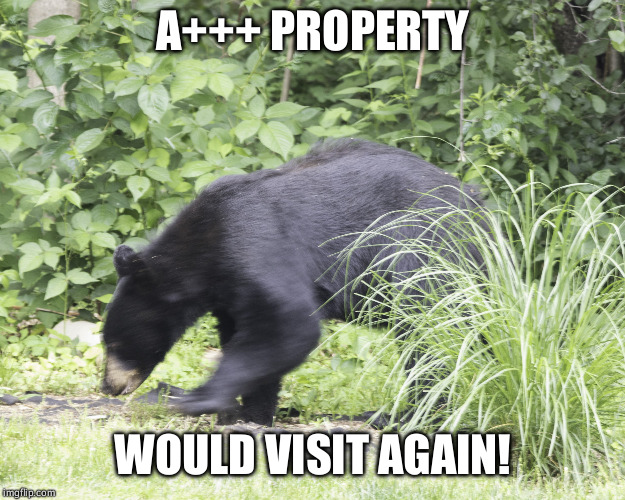 Does a bear shit in the woods? | A+++ PROPERTY WOULD VISIT AGAIN! | image tagged in chainsaw bear | made w/ Imgflip meme maker
