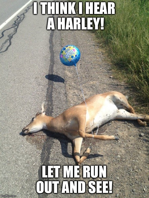 Deer caught in headlights | I THINK I HEAR A HARLEY! LET ME RUN OUT AND SEE! | image tagged in deer caught in headlights | made w/ Imgflip meme maker