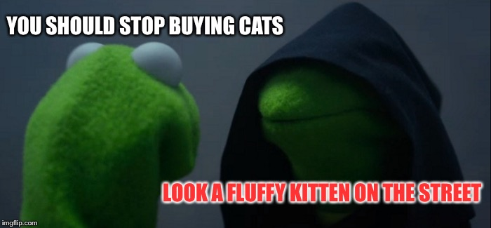 Evil Kermit | YOU SHOULD STOP BUYING CATS LOOK A FLUFFY KITTEN ON THE STREET | image tagged in memes,evil kermit | made w/ Imgflip meme maker