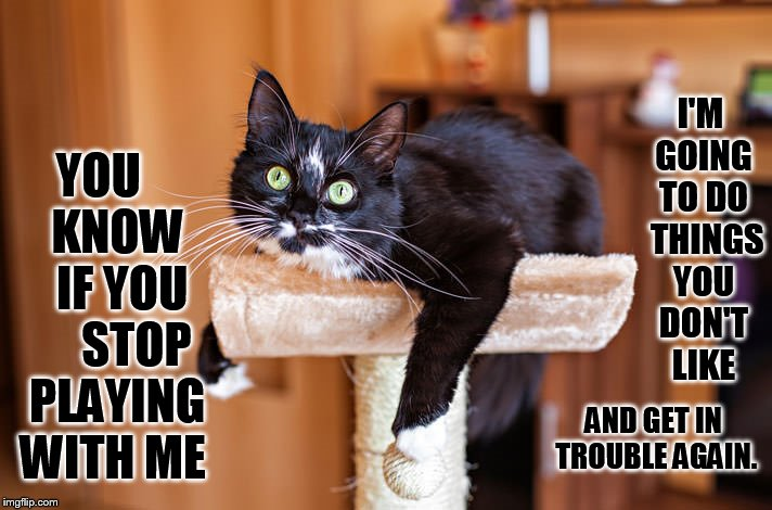 Fair Warning | YOU     KNOW    IF YOU      STOP  PLAYING WITH ME AND GET IN TROUBLE AGAIN. I'M GOING TO DO  THINGS YOU DON'T LIKE | image tagged in memes,cat,don't do it,stop,playing,big trouble | made w/ Imgflip meme maker