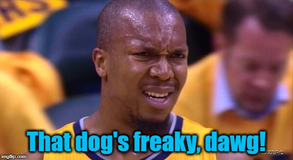 huh | That dog's freaky, dawg! | image tagged in huh | made w/ Imgflip meme maker
