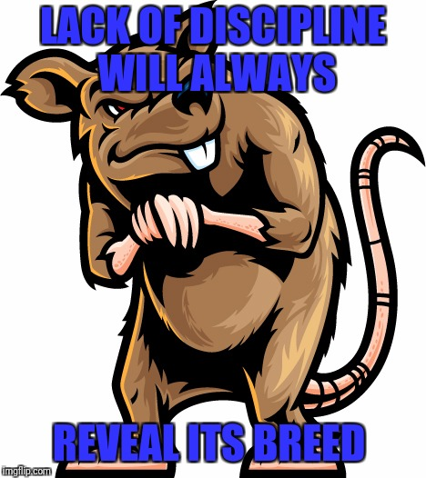 Shady Rat | LACK OF DISCIPLINE WILL ALWAYS REVEAL ITS BREED | image tagged in shady rat | made w/ Imgflip meme maker