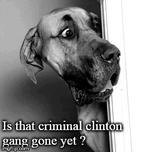 Is that criminal clinton gang gone yet ? | image tagged in cautious dog | made w/ Imgflip meme maker
