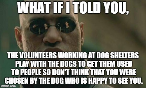 Matrix Morpheus | WHAT IF I TOLD YOU, THE VOLUNTEERS WORKING AT DOG SHELTERS PLAY WITH THE DOGS TO GET THEM USED TO PEOPLE SO DON'T THINK THAT YOU WERE CHOSEN | image tagged in memes,matrix morpheus | made w/ Imgflip meme maker