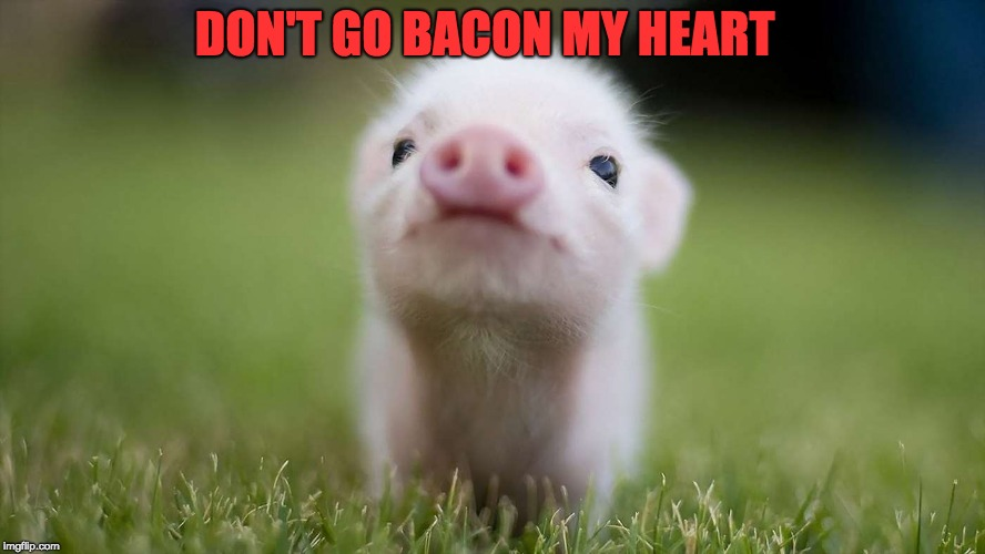 image tagged in cute pig imgflip
