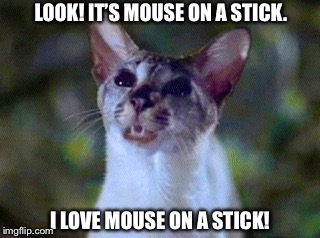 I love mouse on a stick! | LOOK! IT'S MOUSE ON A STICK. I LOVE MOUSE ON A STICK! | image tagged in lucky,memes,stuart little,siamese cat,funny,cat | made w/ Imgflip meme maker