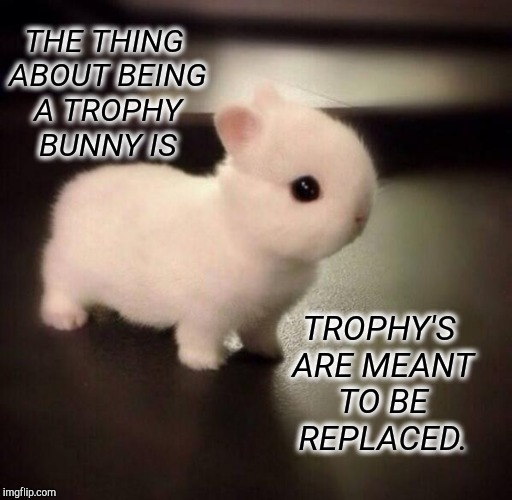 Expendable Trophy Bunny | THE THING ABOUT BEING A TROPHY BUNNY IS TROPHY'S ARE MEANT TO BE REPLACED. | image tagged in disappointed bunny,trophy,wife,getting married,married,funny meme | made w/ Imgflip meme maker