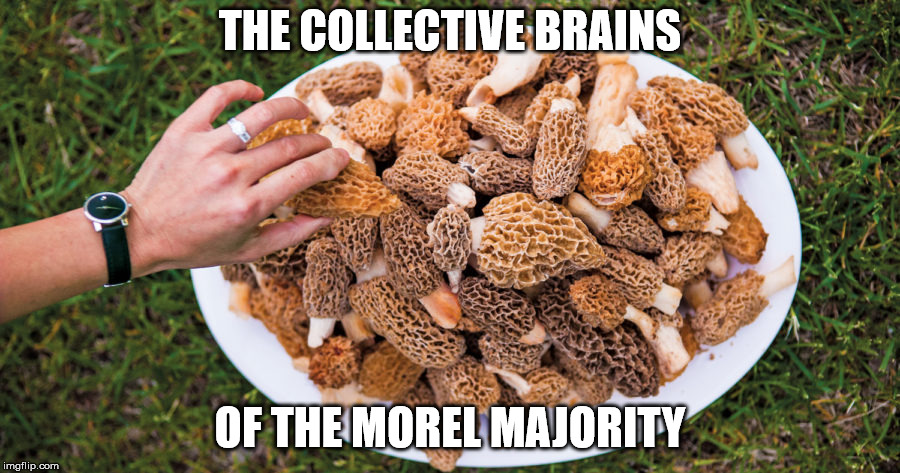 Morel Majority | THE COLLECTIVE BRAINS OF THE MOREL MAJORITY | image tagged in morels,brain,moral majority | made w/ Imgflip meme maker