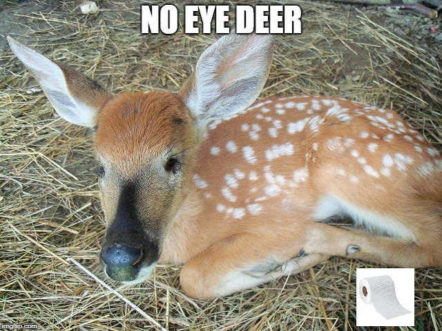 I have no idea. | NO EYE DEER | image tagged in no i-deer,no idea,blind deer,no eye deer | made w/ Imgflip meme maker