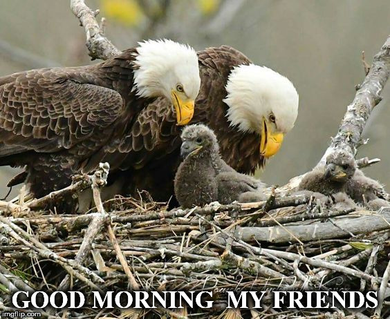 GOOD MORNING  MY FRIENDS | image tagged in e2 | made w/ Imgflip meme maker