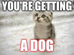 Sad Cat | YOU'RE GETTING A DOG | image tagged in memes,sad cat | made w/ Imgflip meme maker