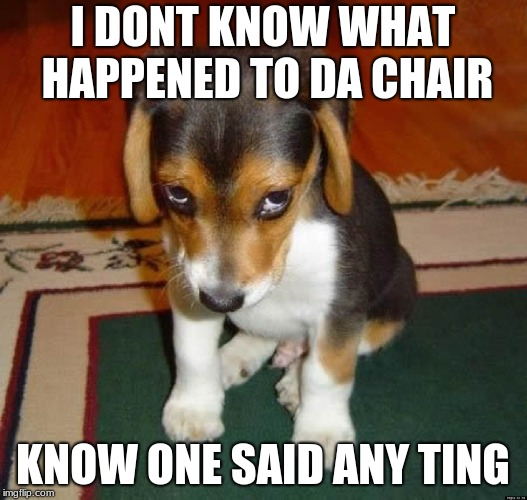 Sad Dog | I DONT KNOW WHAT HAPPENED TO DA CHAIR KNOW ONE SAID ANY TING | image tagged in sad dog | made w/ Imgflip meme maker