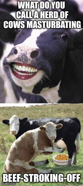 Cow Joke | WHAT DO YOU CALL A HERD OF COWS MASTURBATING BEEF-STROKING-OFF | image tagged in cow,jokes,bad jokes,where's the beef | made w/ Imgflip meme maker