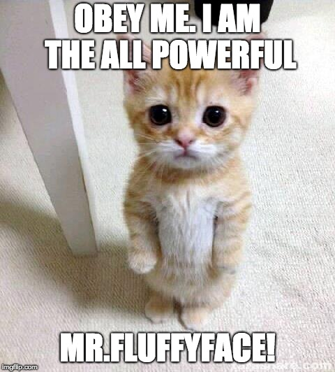 Cute Cat | OBEY ME. I AM THE ALL POWERFUL MR.FLUFFYFACE! | image tagged in memes,cute cat | made w/ Imgflip meme maker