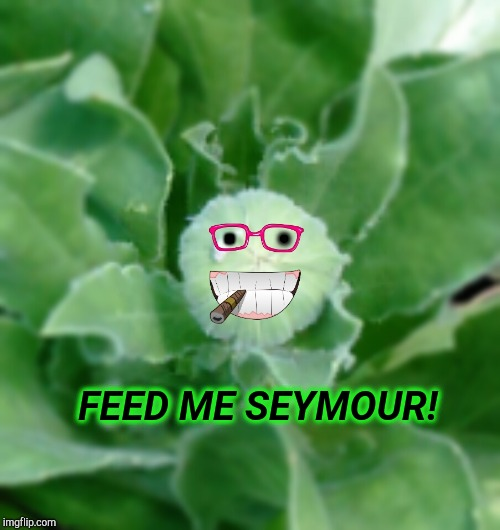 Little Flower Of Horrors | . FEED ME SEYMOUR! . | image tagged in little shop of horrors,feed me,steve martin,aliens,funny memes,funny meme | made w/ Imgflip meme maker