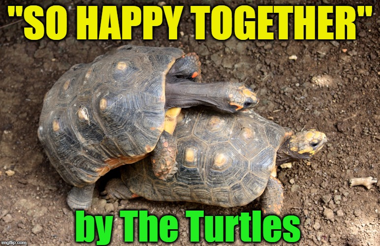 """SO HAPPY TOGETHER"" by The Turtles 