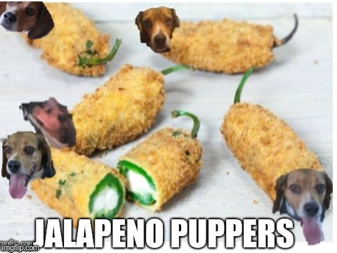 Jalapeno Puppers | JALAPENO PUPPERS | image tagged in puppy,pupper,funny,funny dog | made w/ Imgflip meme maker