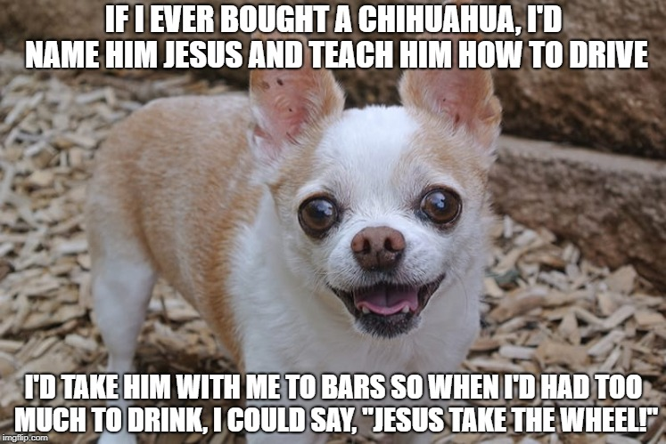 Jesus take the wheel | IF I EVER BOUGHT A CHIHUAHUA, I'D NAME HIM JESUS AND TEACH HIM HOW TO DRIVE I'D TAKE HIM WITH ME TO BARS SO WHEN I'D HAD TOO MUCH TO DRINK,  | image tagged in chihuahua,jesus take the wheel,drunk driving,religion,drinking,tequila | made w/ Imgflip meme maker