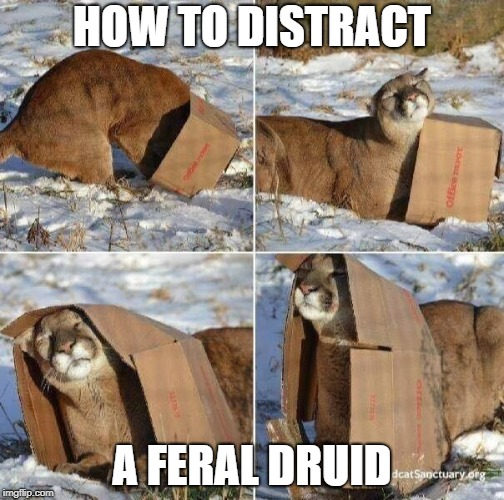 HOW TO DISTRACT A FERAL DRUID | image tagged in mountain lion in box | made w/ Imgflip meme maker