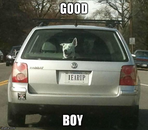 decent dog | GOOD BOY | image tagged in memes,good boy,dog listening,watch dogs,funny license plate | made w/ Imgflip meme maker