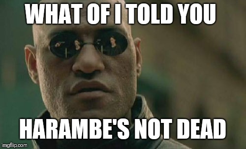 Matrix Morpheus | WHAT OF I TOLD YOU HARAMBE'S NOT DEAD | image tagged in memes,matrix morpheus | made w/ Imgflip meme maker