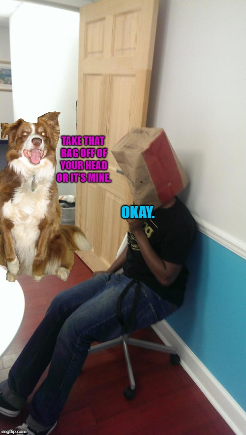 Don't put bags over your head, because it's hard to breathe with a bag on your head. | TAKE THAT BAG OFF OF YOUR HEAD OR IT'S MINE. OKAY. | image tagged in full blown retard,chili the border collie,dogs,border collie,paper bags | made w/ Imgflip meme maker