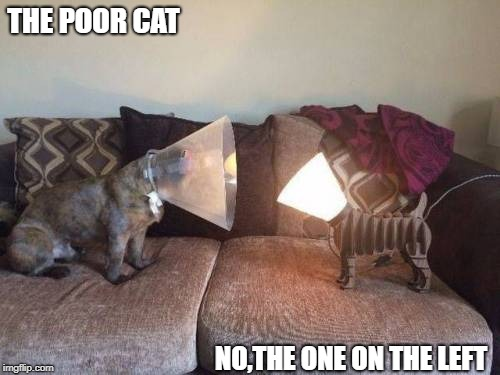 You Light Up My Life | THE POOR CAT NO,THE ONE ON THE LEFT | image tagged in memes | made w/ Imgflip meme maker