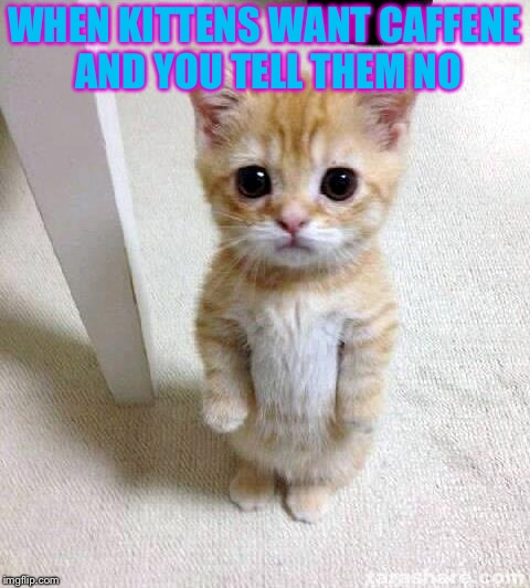 Cute Cat | WHEN KITTENS WANT CAFFENE AND YOU TELL THEM NO | image tagged in memes,cute cat | made w/ Imgflip meme maker