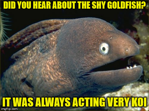 something sounds fishy around here | DID YOU HEAR ABOUT THE SHY GOLDFISH? IT WAS ALWAYS ACTING VERY KOI | image tagged in memes,bad joke eel,goldfish,koi | made w/ Imgflip meme maker