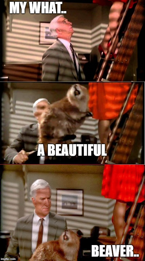 Thanks.. I just had it stuffed..  | MY WHAT.. BEAVER.. A BEAUTIFUL | image tagged in leslie nielsen,drummond | made w/ Imgflip meme maker