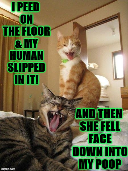 I PEED ON THE FLOOR & MY HUMAN SLIPPED IN IT! AND THEN SHE FELL FACE DOWN INTO MY POOP | image tagged in two turds | made w/ Imgflip meme maker